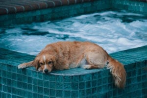 Are you making these 5 pool maintenance mistakes?